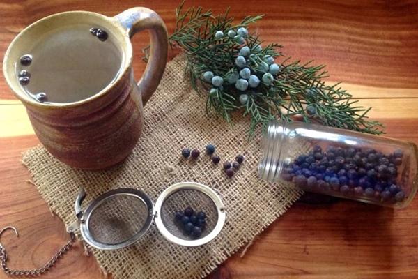 ardıç çayı, kullanımı ve faydaları
