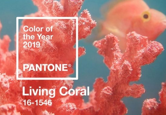 2019 yılının rengi living coral