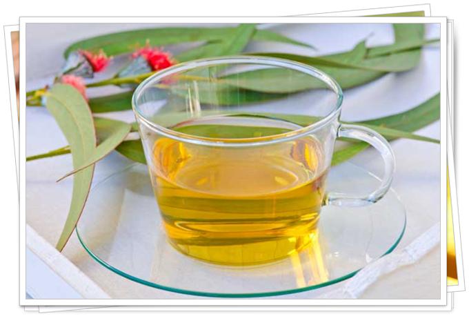 okaliptüs çayının faydaları