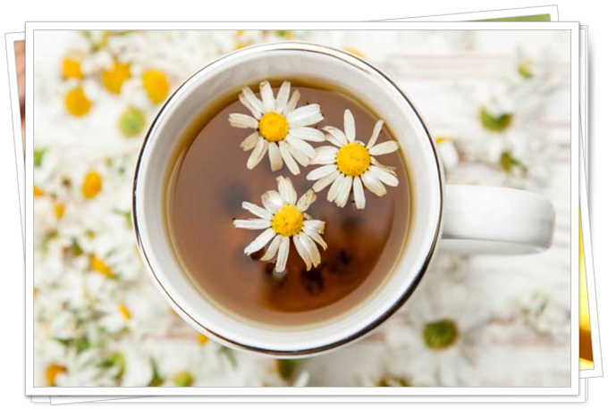 sarı papatya çayının faydaları